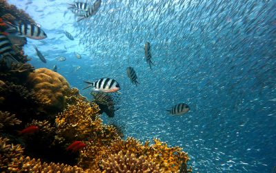 Are we running out of fish? The impact of climate change on our oceans
