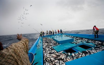 Sustainable Fishing Matters for More Than 120 Million Worldwide