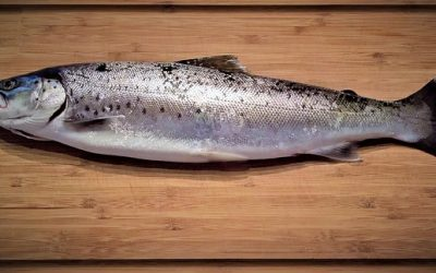 What's the easiest way to scale a fish?